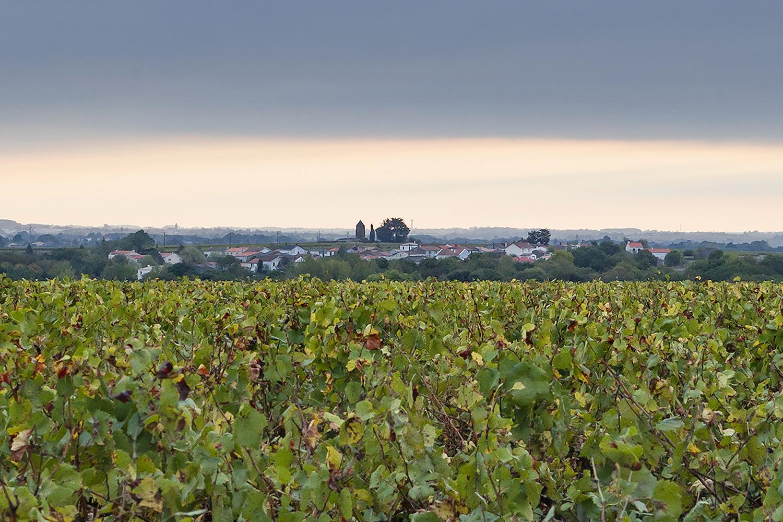 muscadet, muscadet sur lie, Pays Nantaise, Haute Févrie, wijngaard