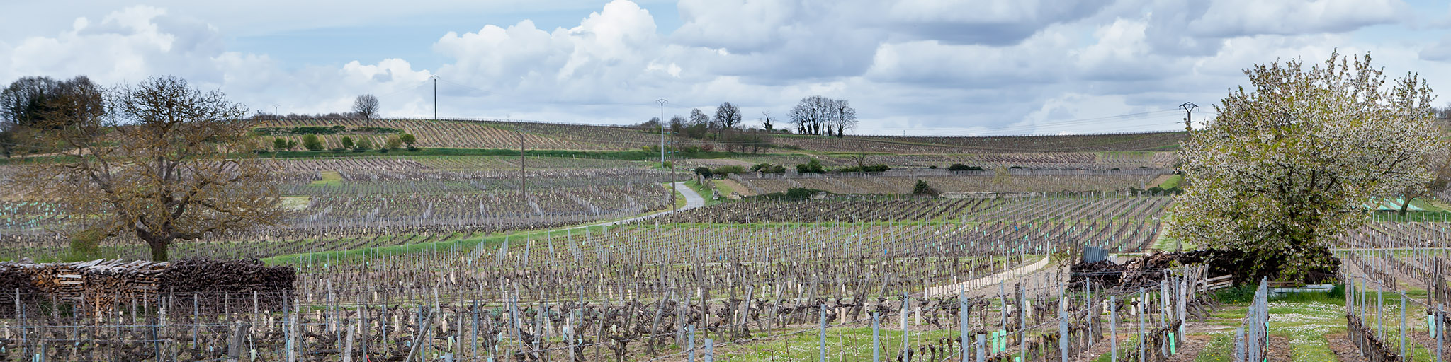 Saumur, Saumur Champigny, Cabernet Franc, Saumur Brut, domaine des Sanzay
