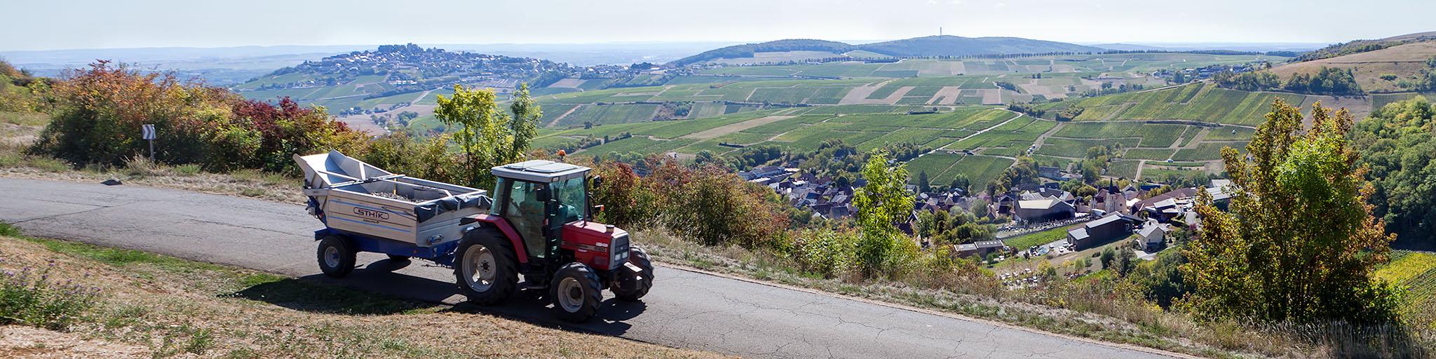 Wijnwerk, Loirewijn, wittewijn, Sancerre, Chavignol, Crottin, Geitekaas, Sauvignon