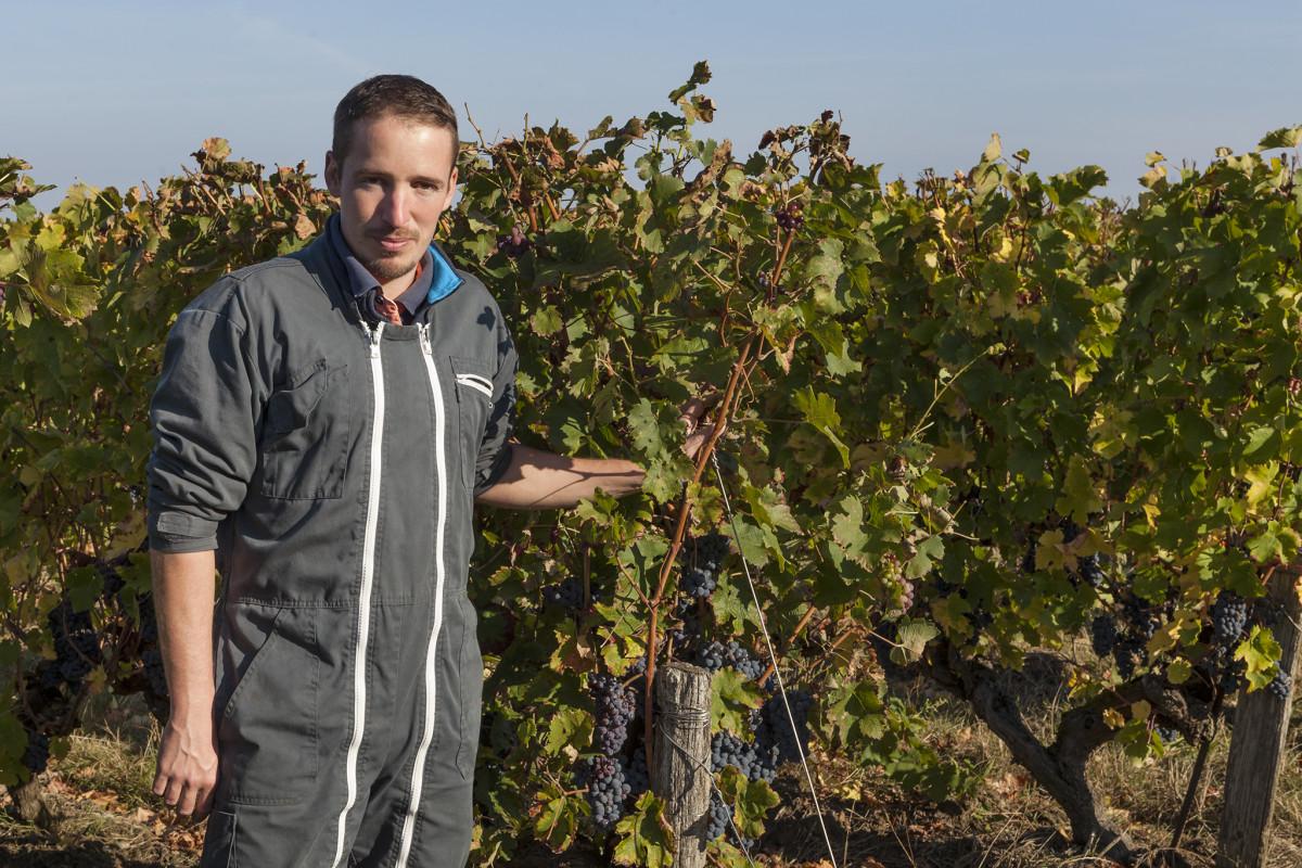 Wijngaard, Romain Chevalier, Vignes de L\'Alma, Vignoble, Saint Florent le Vieile, Gamay, Terra Vitis, Wijnwerk, Rotterdam