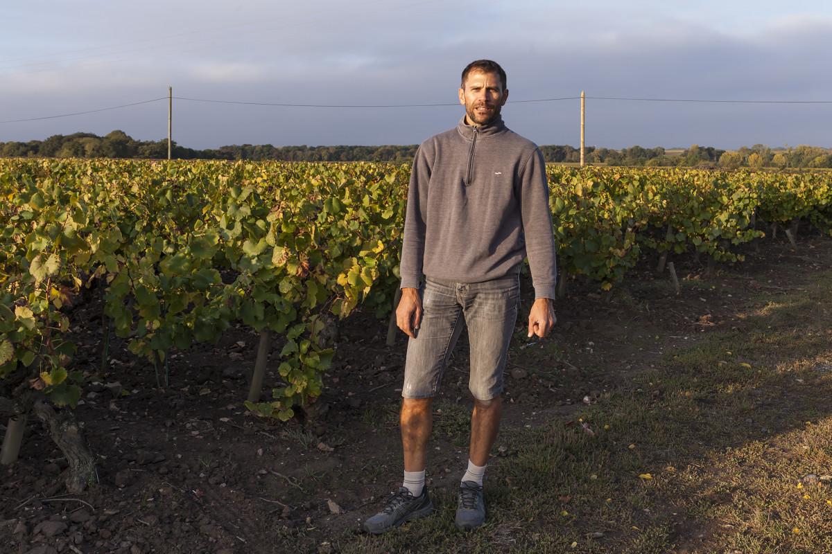 Domaine Haute Févrie, Sébastien Branger, Muscadet, Sèvre et Maine, Sur Lie, Melon de Bourgogne, witte wijn, wijnwerk, loirewijn