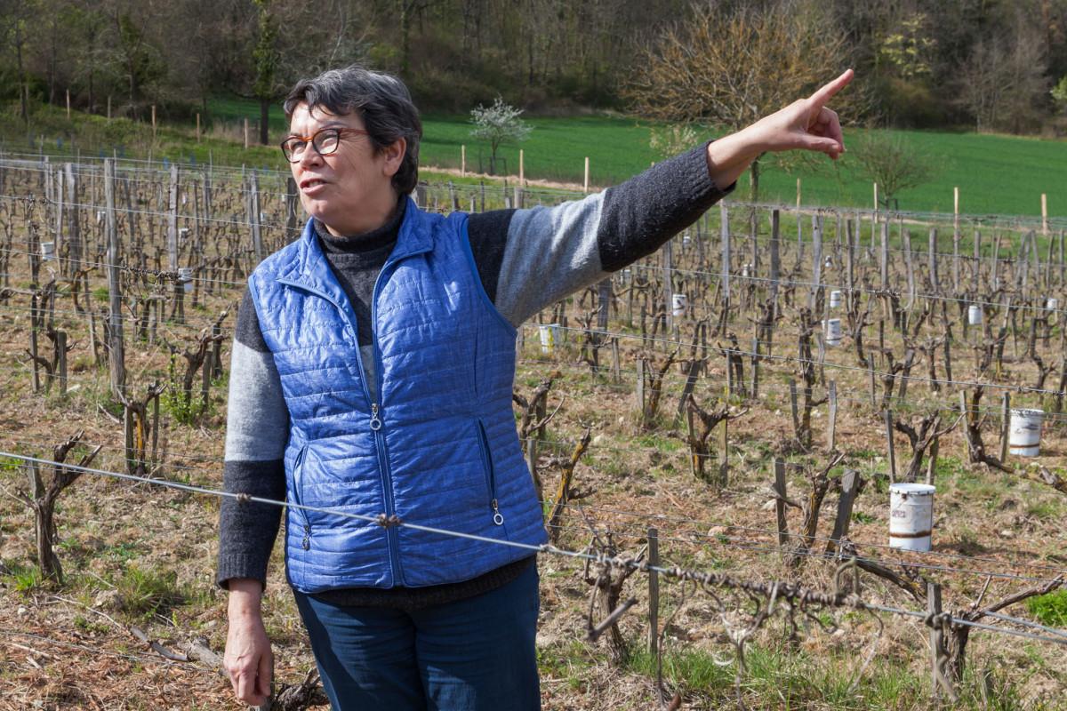 l\'Arpenty, Chinon, Cabernet Franc, Tourraine, rode wijn, AOC